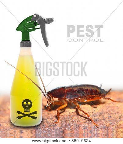 Plastic sprayer with insecticide and big cockroach. Pest control concept.