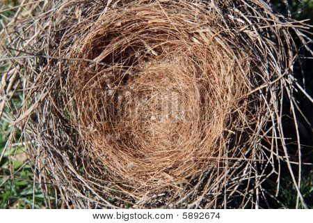 Bird And Nest
