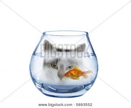 Prontidão em peixes