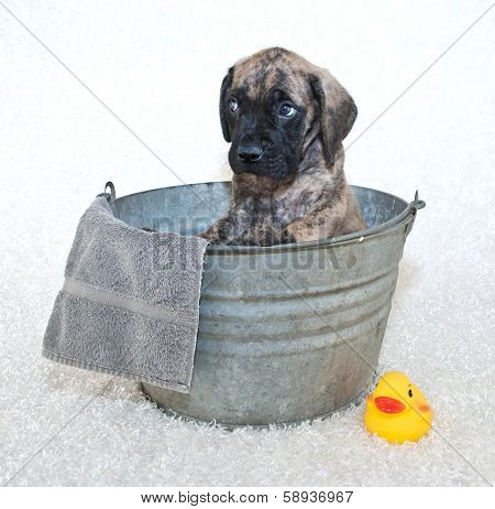 Please Not A Bath!