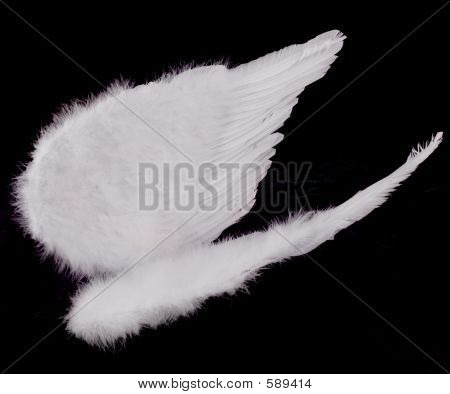 Isolated White Angel Wings On Black