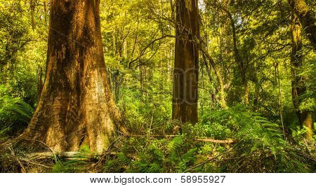 Beautiful Rainforest with Large Tree