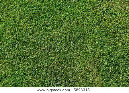 Green grass texture from a soccer field