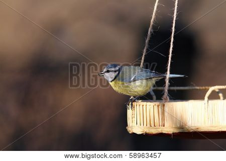 Blue Tit On A Seed Feeder