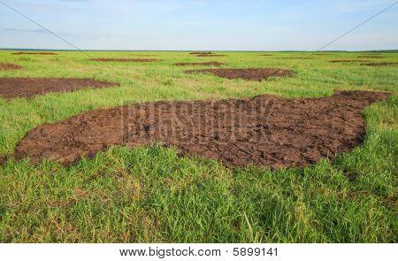 Manure On Field