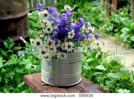 Wild Flowers - 1