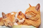 foto of snoopy  - Mother cat and kittens sleeping on the table - JPG