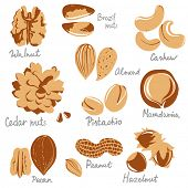 picture of pecan nut  - stylized nuts icons - JPG
