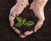 stock photo of loam  - Hands holding sapling in soil surface - JPG