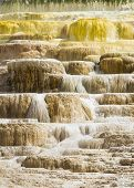 pic of mammoth  - Travertine terraces at Mammoth Hot Springs Yellowstone National Park Wyoming USA - JPG