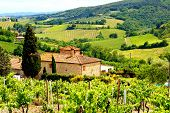 picture of stone house  - View through vineyards with stone house - JPG