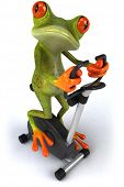 picture of amazonian frog  - Frog working out - JPG