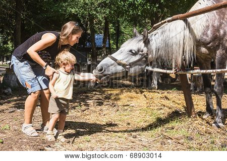 Mum With Two-year Child Feed Horse