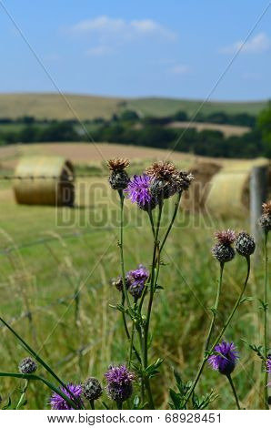 Summer harvest in the English countryside.
