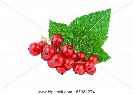 Currant with leaf isolated on white background
