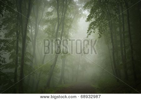Ethereal forest with fog in summer