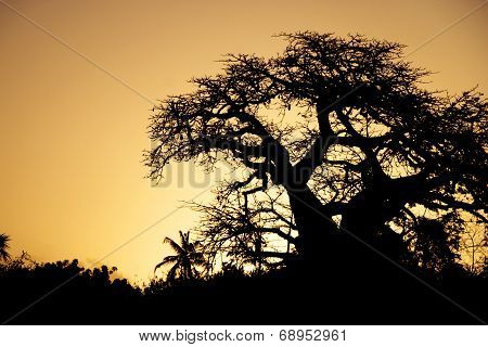 Baobab Silhouette in the Sunset Sky