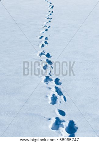 Footprints Winding In Fresh White Snow.