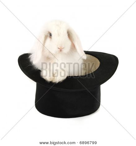 Rabbit And Black Hat