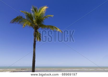 Tropical scene at Ponta do Apaga Fogo beach in Arraial d'ajuda - Bahia - Brazil
