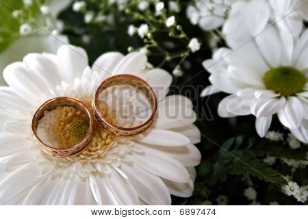 Wedding Rings On White Daisy