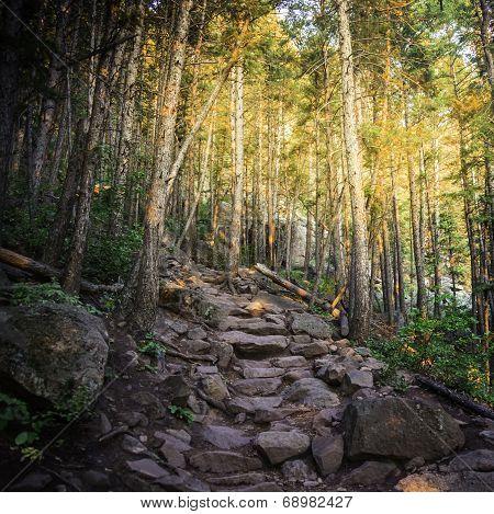 Nature Trail in Colorado