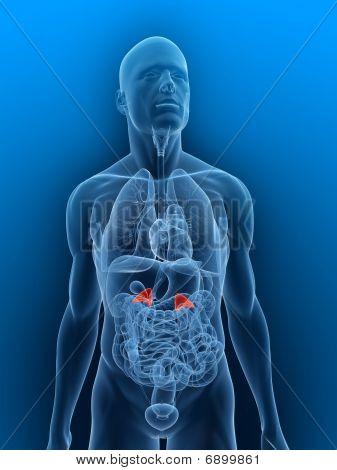 inflamed Adrenal glands