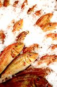 stock photo of mullet  - Red mullet fishes on ice - JPG