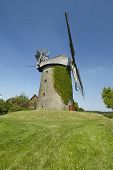 pic of english ivy  - The windmill Seelenfeld  - JPG