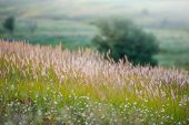 stock photo of spike  - Spikes young green grass on a blurred background summer season - JPG