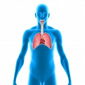 image of respiration  - The lung is the essential respiration organ in many air - JPG