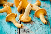 foto of crimini mushroom  - organic fresh chanterelle mushrooms on a wooden background - JPG