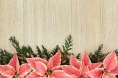 stock photo of poinsettia  - Pink poinsettia flower background border with christmas greenery over light oak - JPG