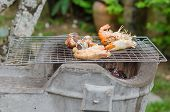 image of babylon  - Spotted babylon and shrimps on grill cooking - JPG