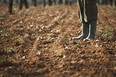 stock photo of fertilizer  - Low section of farmer standing on fertile soil in farm - JPG