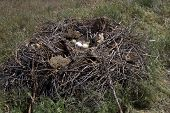picture of steppes  - steppe eagle nest in the spring Kalmyk steppe - JPG