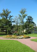 picture of pubescent  - A flower bed in the Botanical Gardens of St - JPG