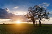 foto of inri  - Sunset over spring field in country with green crop
