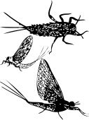 stock photo of mayfly  - silhouette of may fly nimph imago vector - JPG