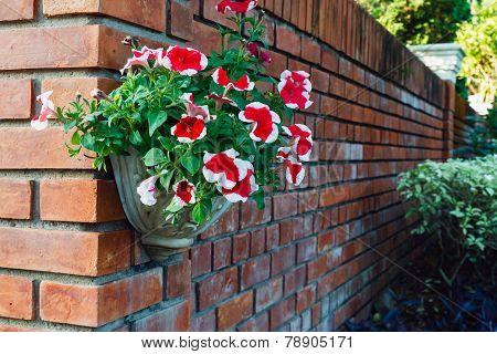 .flowers In Pots