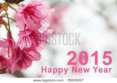 Happy New Year 2015 and Sakura flowers blooming blossom