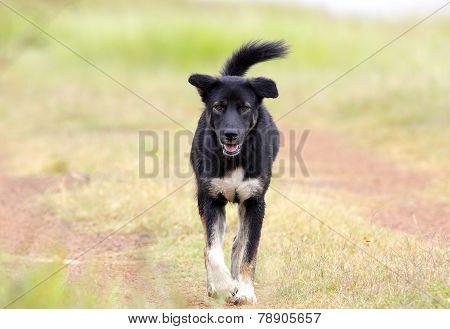 Black Street Dog