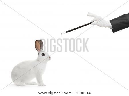 A white rabbit and a hand holding a magic wand