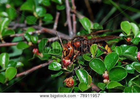 hornet on blooms