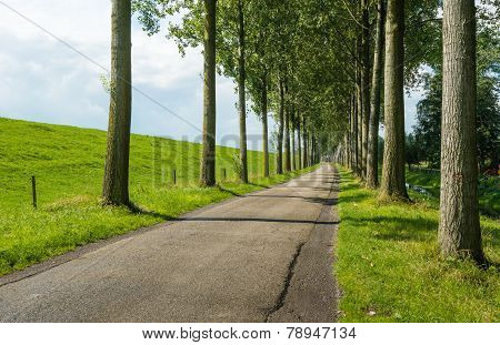 Country Road Between Rows Of Tall Trees