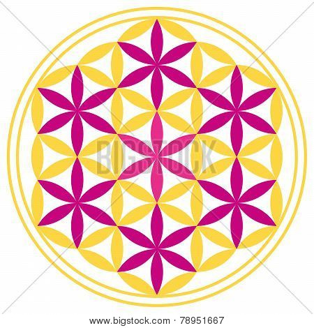 Flower of Life With Seven Magenta Stars