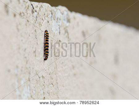 Caterpillar On Wall