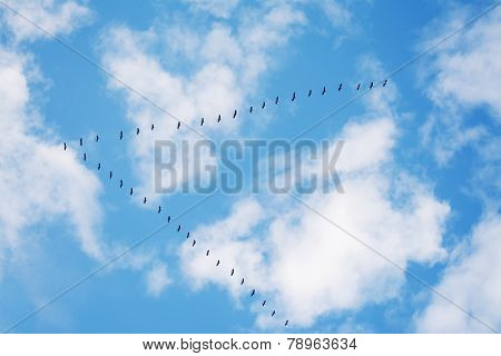Flock Of Birds Flying In Formation