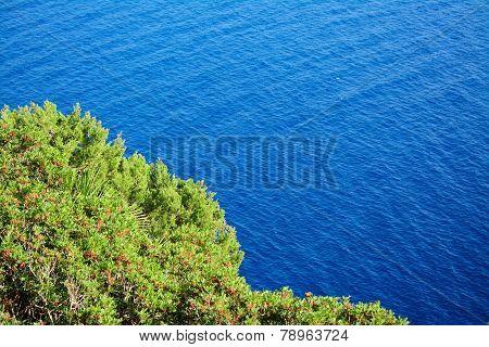 Green Plants Over Capo Caccia Blue Sea