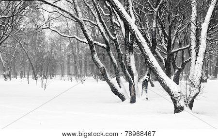 Landscape. Snowfall In A Garden.